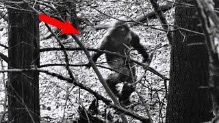 Загадочные и страшные существа, снятые в лесу!