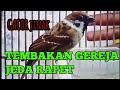 Burung Gereja Gacor Cetrekan Jinak Ngebren Rapet  Mp3 - Mp4 Download