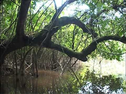 Les paysages de toute beauté du parc marin des Mangro ...