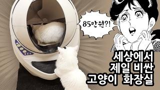 세상에서 제일 비싼 고양이 화장실 85만원?! Most Expensive Cat Litter Box thumbnail