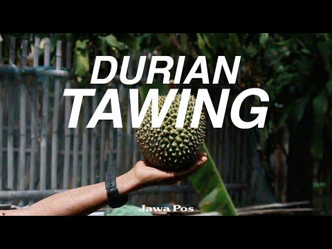 Jawa Pos Belah Durian Episode 18: Durian Tawing Magetan
