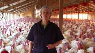 Video Tour of a Turkey Farm and Processing Plant Featuring Temple Grandin