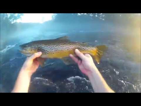 Fly Fishing The Lower Saluda River 8/27/16