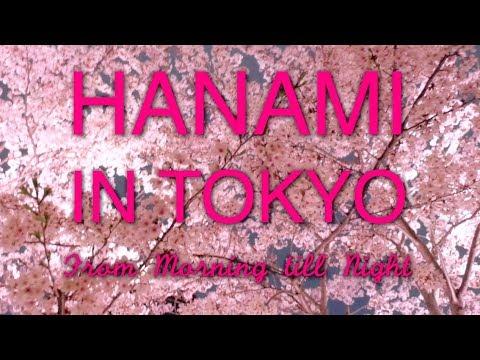 HANAMI IN TOKYO - From Morning till Night