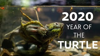 Shell-ebrating the Year of the Turtle in 2020!