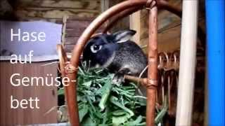 Hasenbraten mal anders 2 Kaninchen auf Gemüsebett by Sallys Hamster Tv
