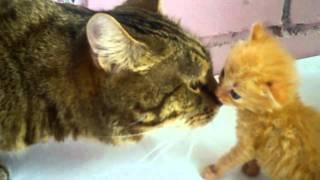 Красивые котята играют