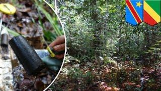 World's largest peatland with vast carbon sink found in Congo   TomoNews