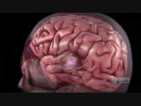 The machines and technologies that helped in the discovery of the human brain