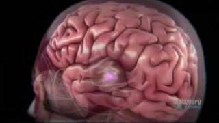 The Human Body Brain Power 2 of 5