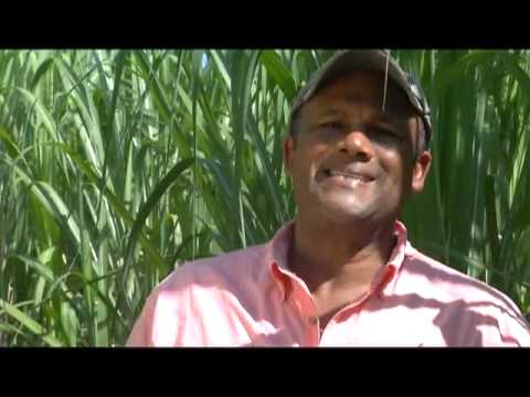 Digicel Haiti: Entrepreneur of the Year | Eddy Michel Daniel