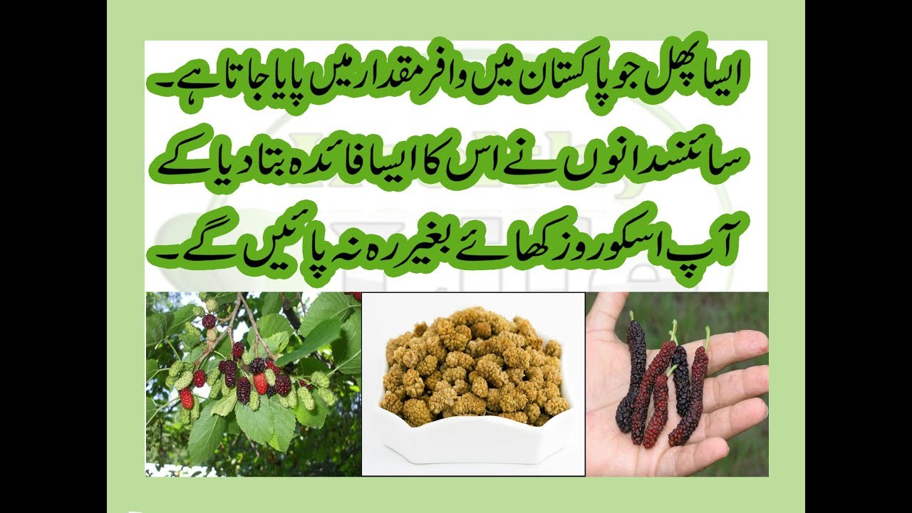 6264a4216e Amazing Health Tip | How Mulberries beneficial for human? | Unbelievable  Mulberry benefits!