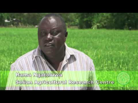 Shamba Shape Up (Tanzania) - Rice, Chicken, Family Nutrition