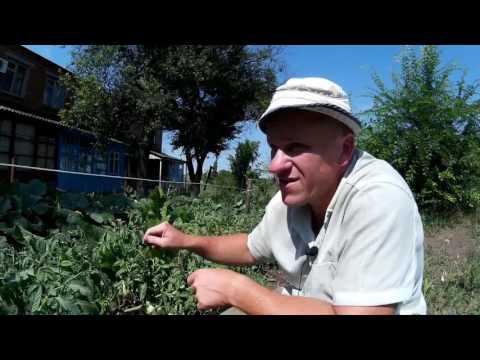 Коттеджный поселок Певчее - купить участок в 25 км от МКАД