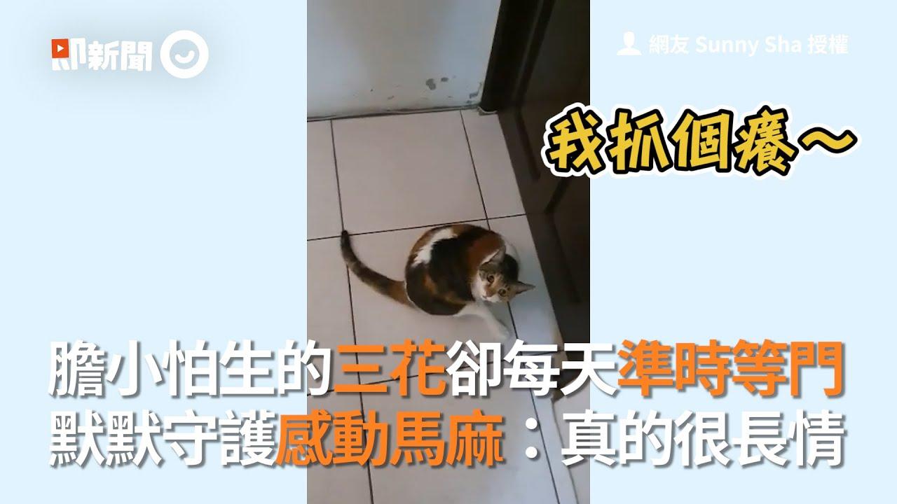 膽小怕生三花每天準時等門默默守護 馬麻感動:真的很長情|寵物|貓咪|窩心