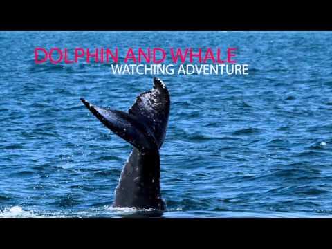 Oceanside Adventures, Come join us in Oceanside !