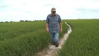 Flowing Again | Water for Rice