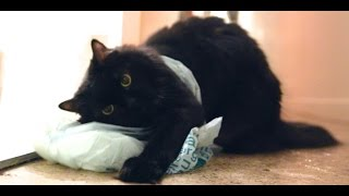 The Danger of Plastic Bags for Pets