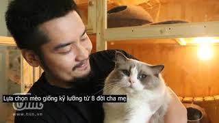 9x Sài Gòn và đàn mèo Ragdoll bạc tỷ: Xây hẳn 'cung điện' lộng lẫy đầy đủ tiện nghi cho 'boss'