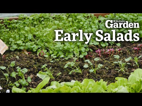 early-salads-|-kitchen-garden-magazine-|