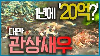 세계3대 관상어수출국 대만, 관상어는 여기 다 있다!! #형광 물고기 #엔젤피쉬가 350만원 #관상새우 #대만 가오슝 #해수어 #  [어영차바다야 해외수산]
