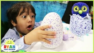 Toy Hunt New Toys For Kids Hatchimals Surprise Eggs Blind Bag Nerf Nitro Disney Cars McQueen