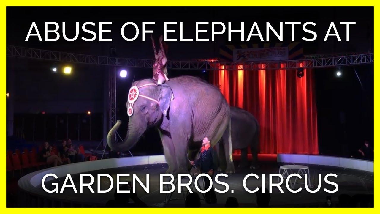 Abuse Of Elephants At Garden Bros Circus Youtube