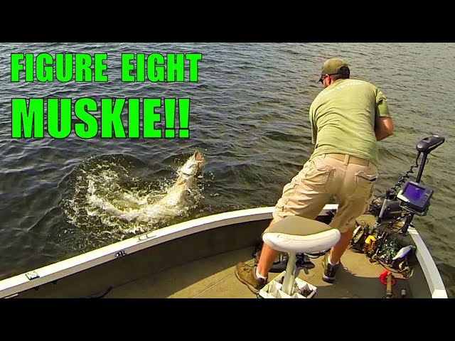 MUSKY FISHING EAGLE LAKE!! - Northwest Ontario Muskies and Info on Wausau Musky Bash