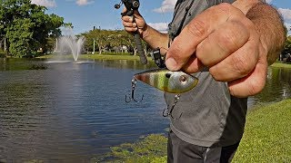 BEST LIPLESS CRANKBAIT BITE ON YouTube!?!? (Florida Pond Bass Fishing)