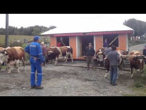 House Moving In Chile