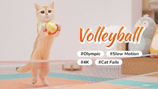 Cat VS Volleyball - Olympurk (Cat Olympic) Game