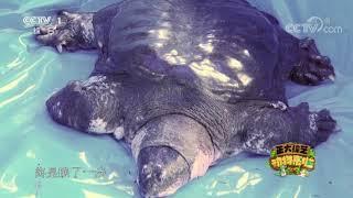 [正大综艺·动物来啦]以下哪种物种属于功能性灭绝| CCTV - YouTube