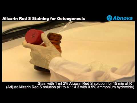 Alizarin Red S Staining For Osteogenesis