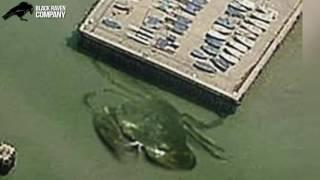 Фото-факт #8 Гигантский краб в порту