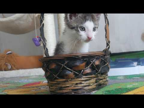 Angry kitten trying to destroy the basket 4K UHD 🐱 🐈