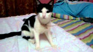 My cute cat mingky