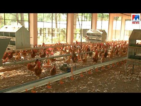 മാത്യകയായി കോഴിവളർത്തൽ കേന്ദ്രം | Kozhikode poultry farm