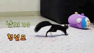 거실 적응중인 청설모 다람쥐, 인형을 좋아하는 손다람쥐…