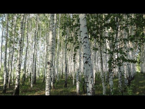 Песня От чего так в России березы шумят - Ансамбль Любава скачать mp3 и слушать онлайн