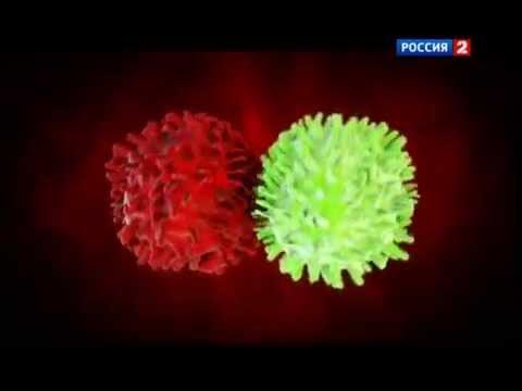 Что входит в иммунную систему человека?