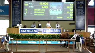2013 Session 3 Magic Millions National Broodmare Sale