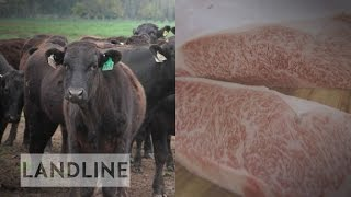 Blackmore Wagyu dispute divides Victorian town over 'right to farm'