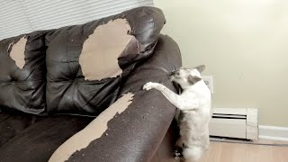 N2 the Talking Cat - #TeamN2 Mice Bucket Challenge