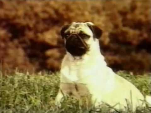 Milo & Otis - Otis rides a turtle to shore from YouTube · Duration:  1 minutes 5 seconds