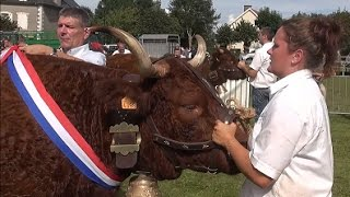 Le concours cantonnal de la race Salers de Saint Bonnet de Salers