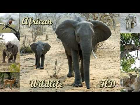 African Wildlife HD - pictures of wild animals and birds of Africa (photo slideshow)