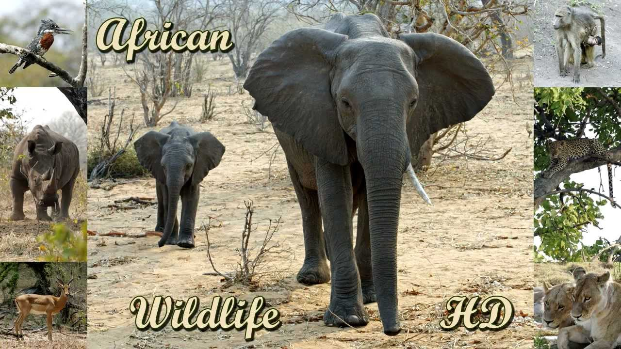 animals wild africa african wildlife birds slideshow