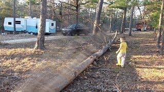 CLOSE CALL TREE FALL!!
