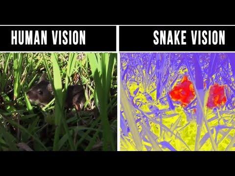 മനുഷ്യൻ കാണുന്നതും മറ്റ് ജീവികൾ കാണുന്നതും തമ്മിലുള്ള വ്യത്യാസം കാണുക  vision difference between...
