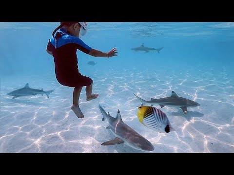 kids-swimming-with-sharks-in-tahiti!!-are-they-nice??